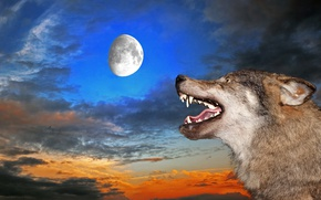 Wallpaper wolf, the sky, mouth, grin, fangs, the moon