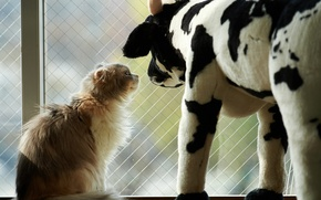 Picture cat, cat, toy, cow, window