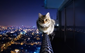 Wallpaper cat, the city, lights, railings, balcony, integrifolia