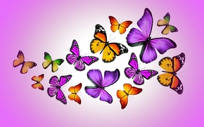 Picture butterfly, colorful, purple, butterflies, design by Marika