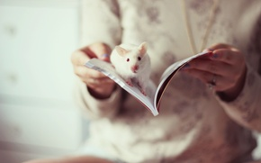 Picture mood, book, rat