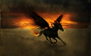 Picture sunset, wings, Horse