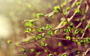 Wallpaper macro, spring, greens, branches, spring, leaves