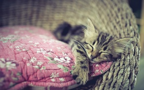 Picture cat, comfort, house