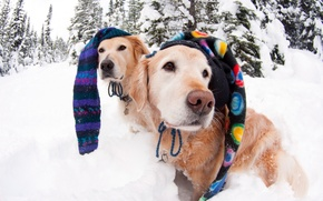 Picture caps, dogs, winter