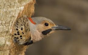 Picture bird, wood, eye, dots, beak, black dots