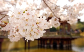 Picture flowers, branch, spring, petals, flowering