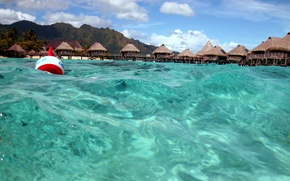 Picture water, transparency, the ocean, Laguna, Moorea, Paradise isl
