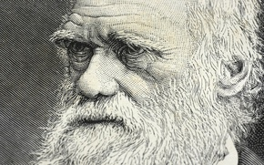 Wallpaper drawing, scientist, Darwin, genius