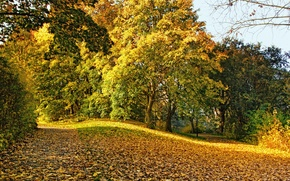 Picture autumn, leaves, trees, Park, yellow, fallen