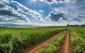 Picture road, field, landscape