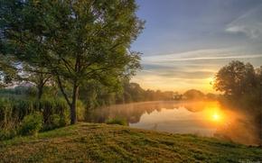 Wallpaper trees, lake, sunset
