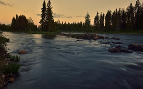 Picture forest, summer, river, for