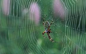 Picture web, spider, nature, macro