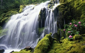 Picture flowers, waterfall, moss, windows 7, seven