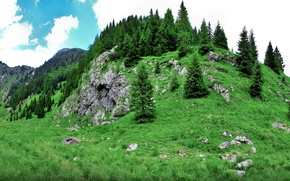 Picture forest, Hill, grass