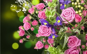 Picture roses, bouquet, buds, irises
