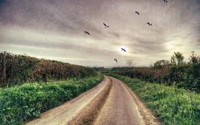 Picture road, landscape, birds, style, background, texture