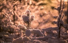 Picture the sun, light, snow, needles, glare, branch, needles