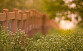 Picture summer, grass, flower, nature, fence, bokeh