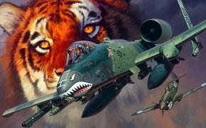 Picture tiger, figure, art, A-10, Curtiss, P-40, Warhawk, Fairchild, Thunderbolt II, Republic, American fighter, American single …