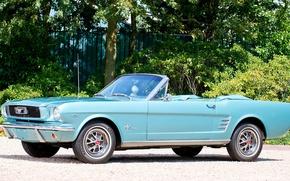 Picture Mustang, Ford, Machine, Ford, Desktop, Mustang, Car, Car, Blue, Wallpapers, Musclecar, 1966, Beautiful, Convertible, Wallpaper, …