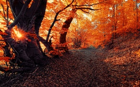 Picture autumn, the sun, road, Nature