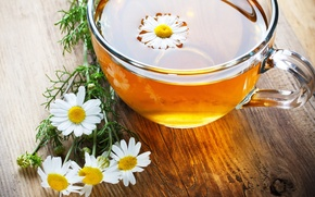 Picture flowers, background, Wallpaper, tea, mood, Daisy, mug, Cup, wallpaper, widescreen, flowers, background, full screen, HD …