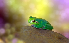 Picture glare, background, stone, frog, green