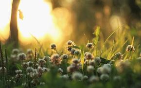 Wallpaper grass, light, nature, plants, morning, clover