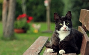 Picture cat, cat, look, bench, black and white