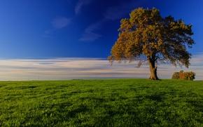 Picture grass, tree, Germany, Bayern, horizon, meadow, Germany, Bavaria