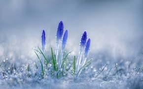 Picture frost, grass, drops, macro, flowers, bokeh