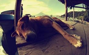 Picture landscape, people, boat, dog, dog, sleeping, lies, Guatemala