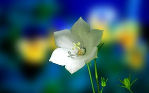 Picture flower, nature, plant, petals