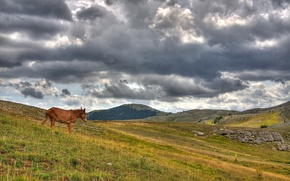 Picture hills, horse, Clouds