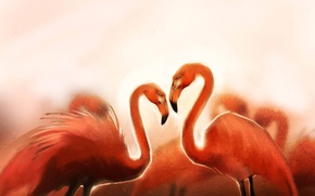 Picture birds, art, flamingo