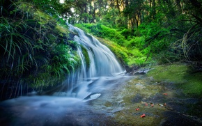 Picture forest, grass, water, waterfall, moss, stream