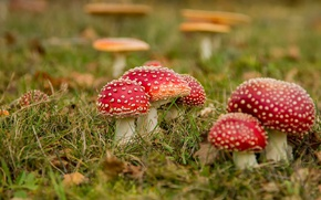 Picture nature, autumn, mushrooms