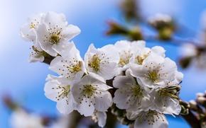 Picture spring, flowering, bokeh, bokeh, spring, Flowering