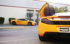 Picture the sun, orange, tree, supercar, tree, sun, orange, McLaren, mp4, Mclaren, 12c