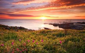 Wallpaper flowers, sea, nature, oceans, sea, sunset
