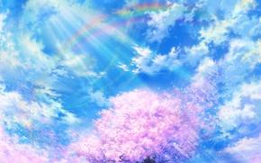 Picture the sky, clouds, nature, tree, rainbow, petals, Sakura, art, tsujiki