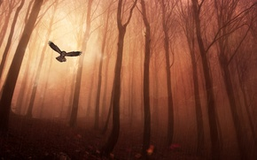 Picture forest, trees, rain, owl
