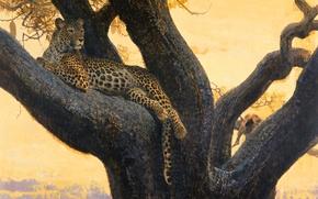 Picture cat, wild, branch, predator, stay, picture, art, leopard, tree, Bob Kuhn, spot