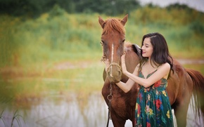 Picture summer, face, horse, horse, Asian