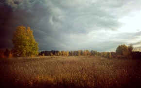 Picture forest, nature, thunder