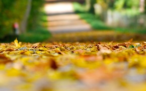 Picture autumn, leaves, macro, background, earth, widescreen, Wallpaper, yellow leaves, blur, blur, wallpaper, leaves, widescreen, leaves, …