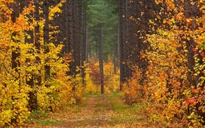 Picture road, autumn, forest, leaves, trees, landscape, clearing