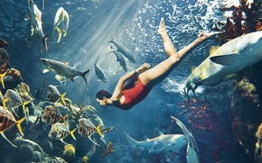 Picture sea, swimsuit, fish, red, model, actress, corals, brunette, singer, Rihanna, sharks, under water, rays of ...